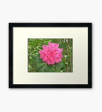 Pretty Pink Amicola Falls Framed Print