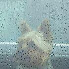 Rainstorm by Thomas Stevens