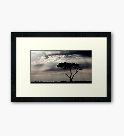 One Tree Hill - Northland, NZ Framed Print