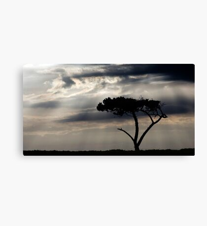 One Tree Hill - Northland, NZ Canvas Print