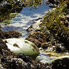 Tide Pool Smooth Rock With Seaweed by Sandra Gray
