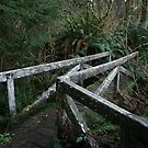Mossy Bridge in the Redwood Forest by FarWest