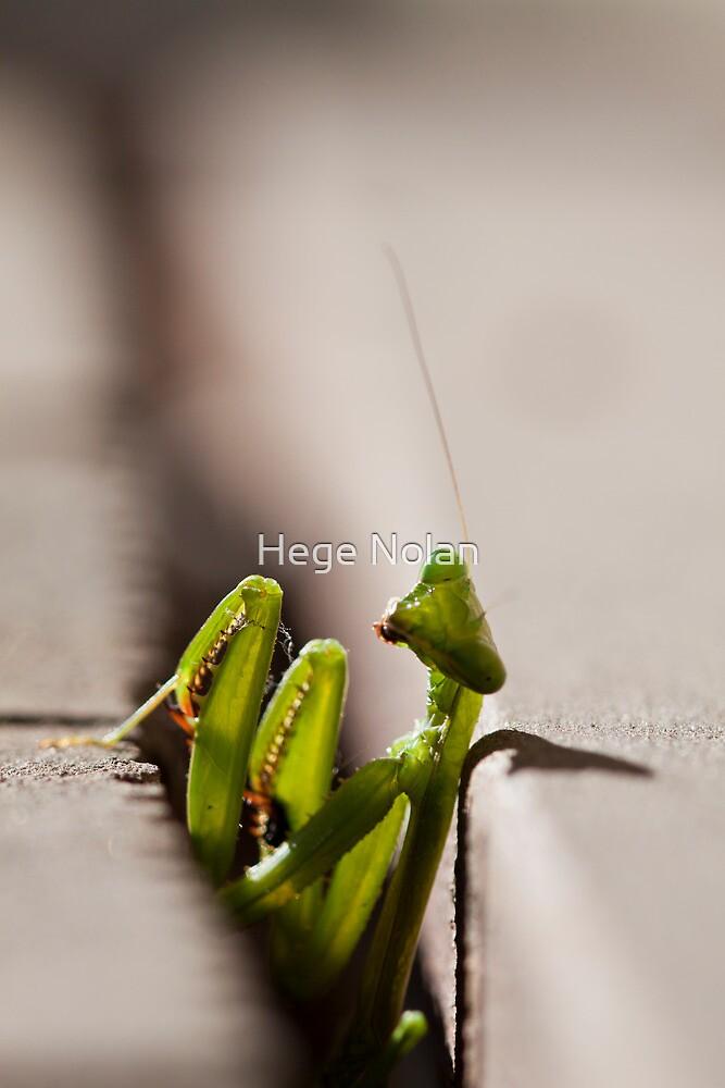 Lurking Praying Mantis by Hege Nolan