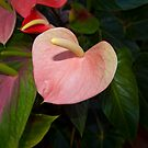 Anthurium trio - Flamingo flowers von 3Cavaliers