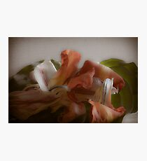 Dried Tulip Flower Petals Photographic Print