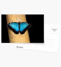 Black'n Blue Postcards