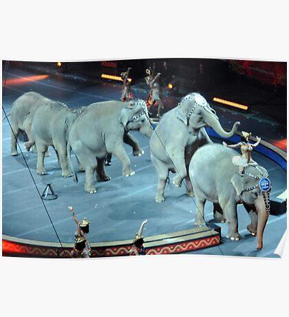 Circus Elephants Poster
