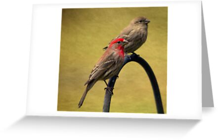 Male and Female House Finch by Renee Blake