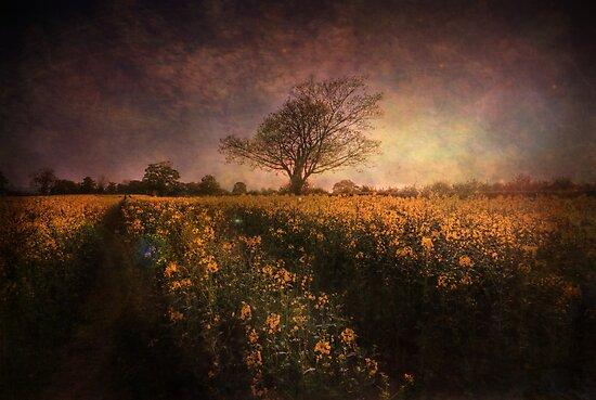 Timeless by Yhun Suarez