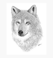 The Wolf Photographic Print
