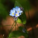 Forget me nots by bared