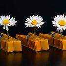 Pinched Daisies by Karen Havenaar