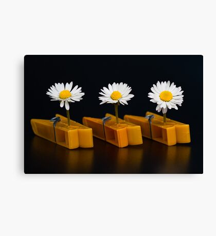 Pinched Daisies Canvas Print