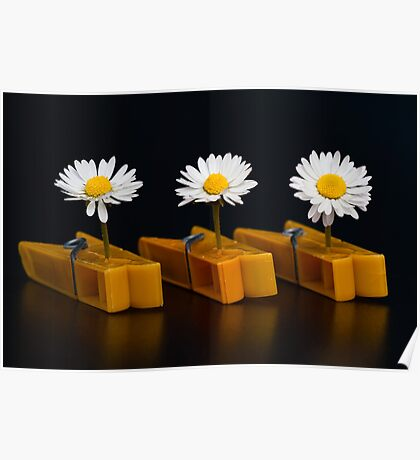 Pinched Daisies Poster