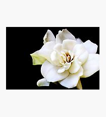My April Gardenia Photographic Print