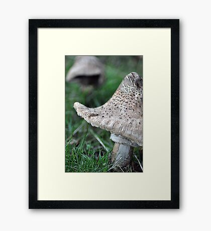 There's not mushroom here... Framed Print