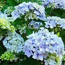 Blue Hydrangea Flowers Green Garden art Baslee Troutman by BasleeArtPrints