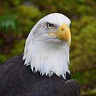 Northwest Wildlife by Kathy Yates