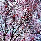 Blooming!  by DearMsWildOne