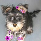 Flower puppy by bobby1