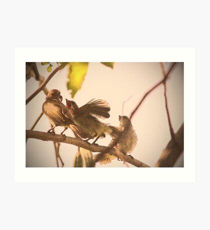 birds outside my window Art Print