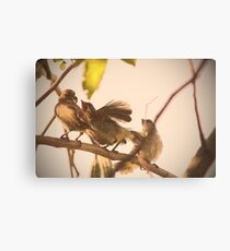 birds outside my window Canvas Print