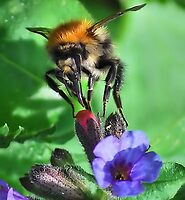 Monster Bee by relayer51