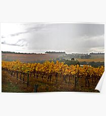 Late Autumn Vineyard Poster