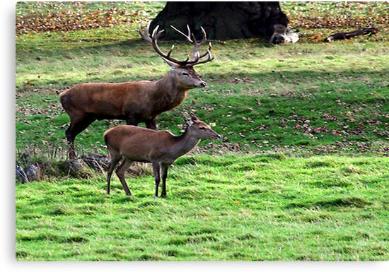 Alone Together at Last  (Red Deer) by Trevor Kersley