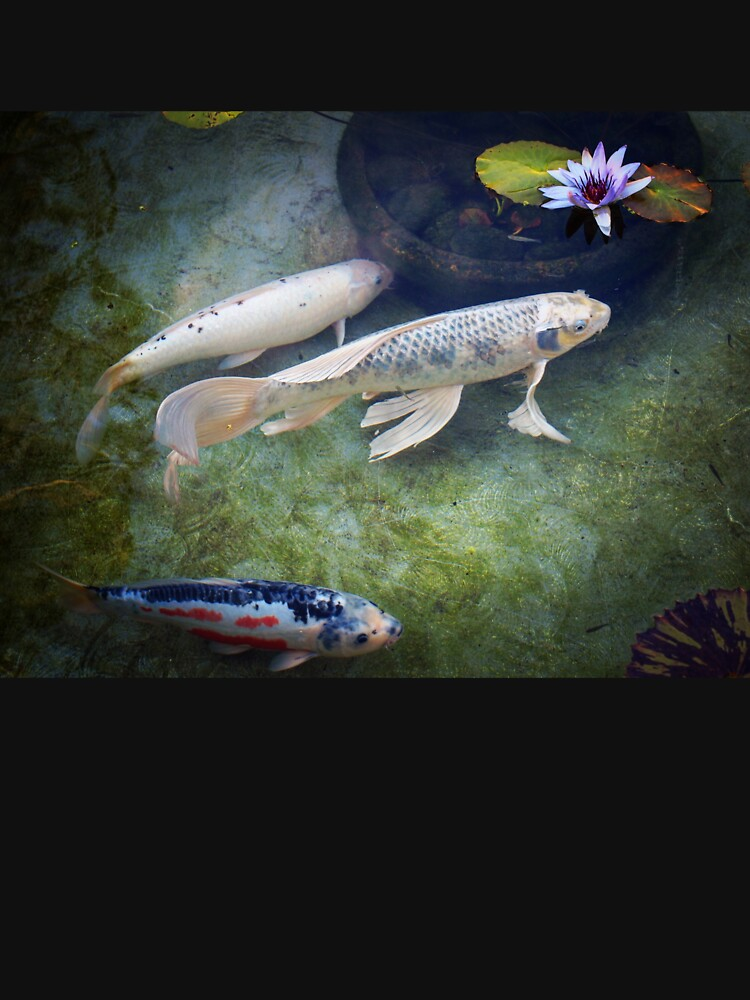 At The Koi Pond... by douglasewelch