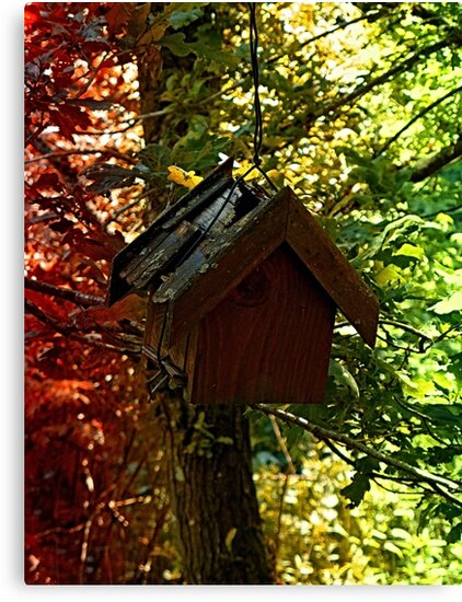 Abandoned old bird box in the forest by Patrick Jobst