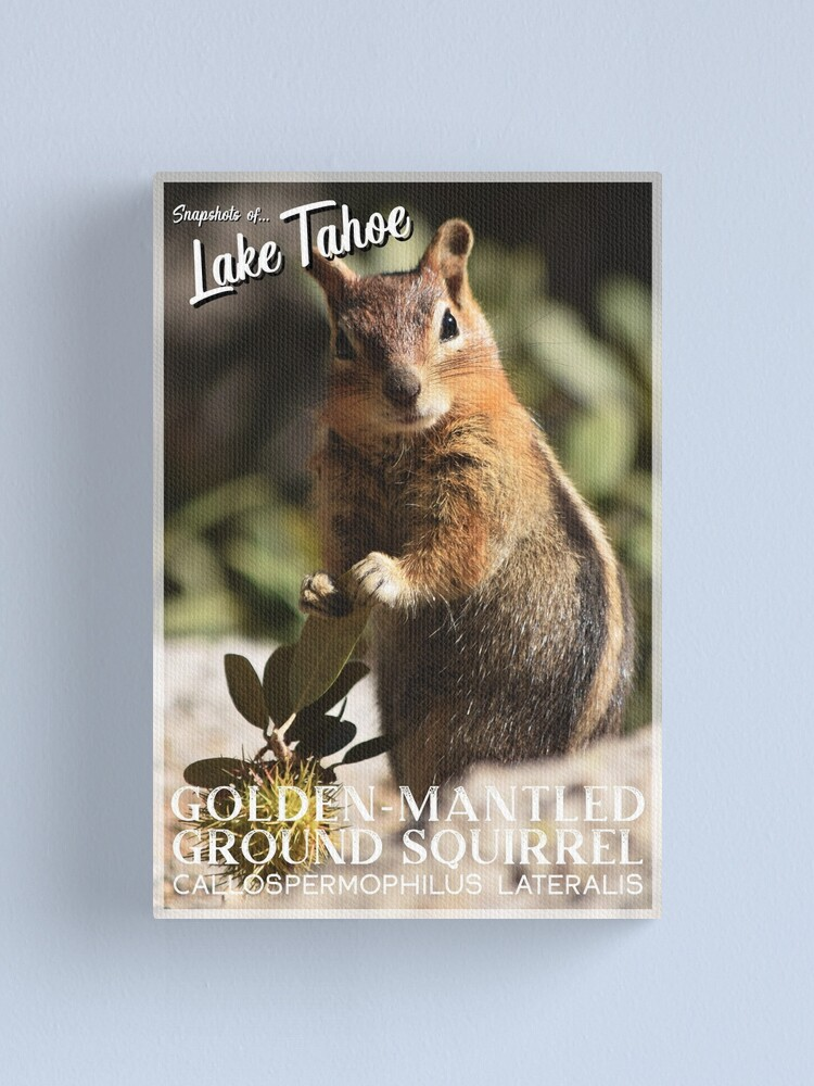 Alternate view of Snapshots of Tahoe: Golden-mantled Ground Squirrel Canvas Print