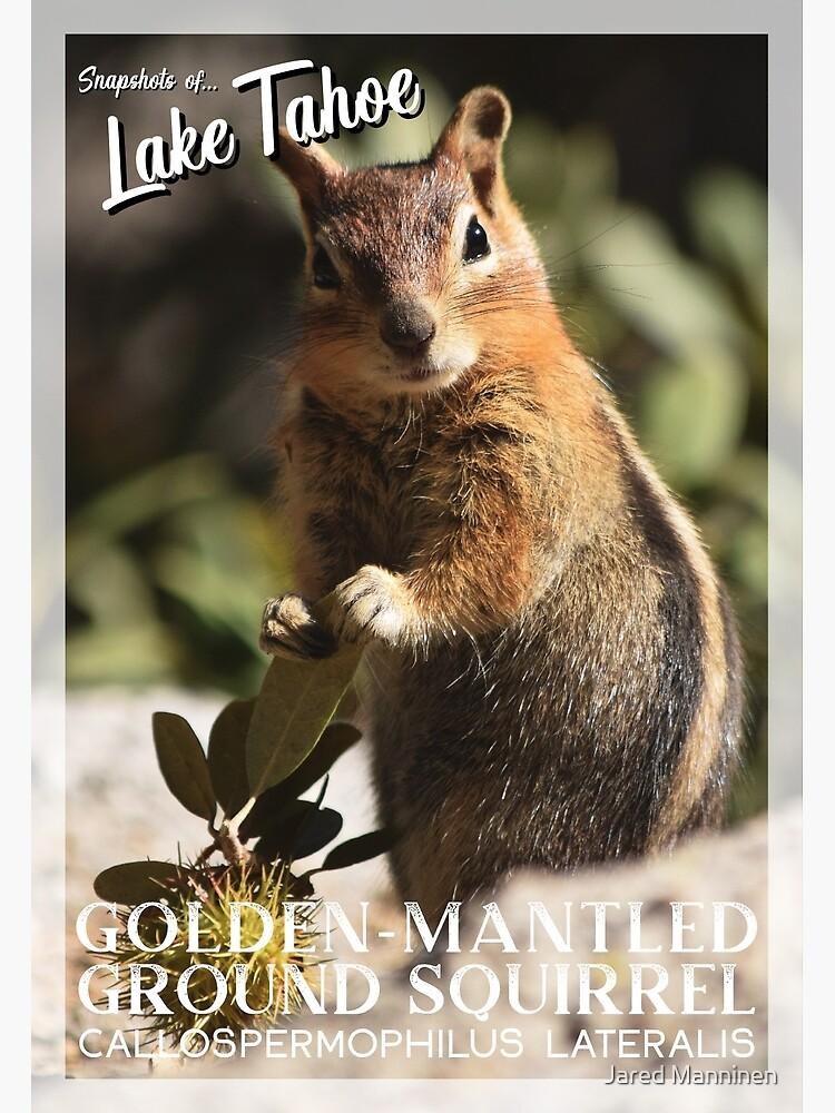 Snapshots of Tahoe: Golden-mantled Ground Squirrel by JaredManninen