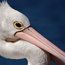 Pelican, Head Shot by Eve Parry