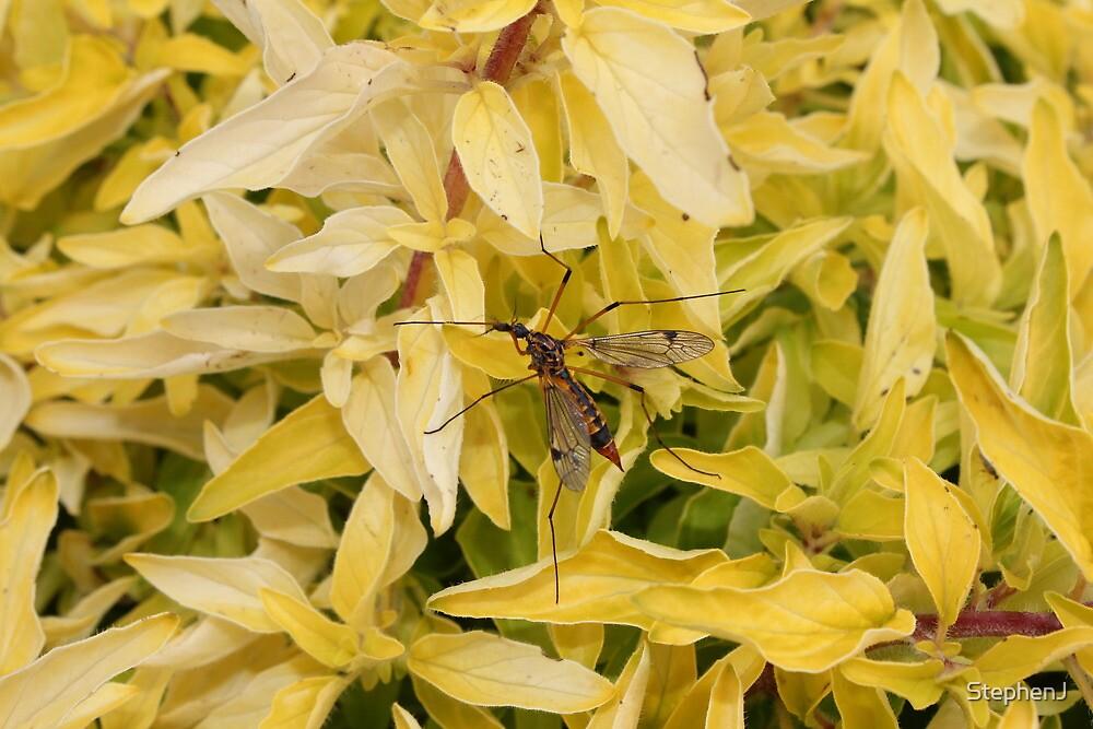 Crane Bug by StephenJ