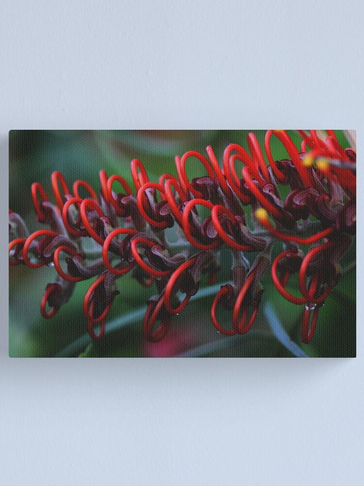 Alternate view of Grevillea blood orange Canvas Print