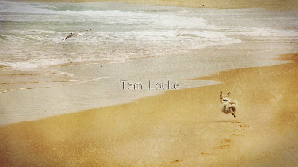 Determination by Tam  Locke