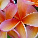 exquisite summer flowers by ChristineBetts