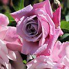 Dusky Pink Rose by Susan Moss