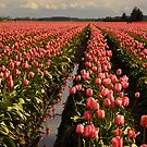 Pink Pink by Jay Morgan