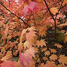 autumn beauty by gaylene