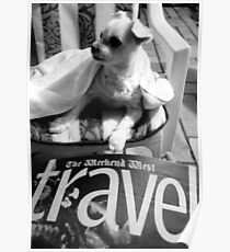 Destinations for dogs Poster
