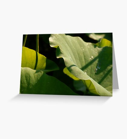 Frondescence Greeting Card