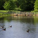 Morning at Barth Pond by Lyle Hatch