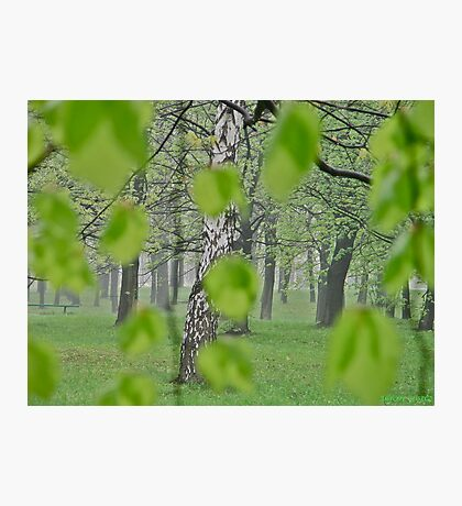 Views: 2369 . My Green Day . by Brown Sugar . Featured * . This image Has Been S O L D .  .WoW !!! .   How wonderful !!! thank you !!! Happy Easter Friends !!! Photographic Print