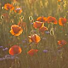 Golden moment . Psychodelic opium poppy delusion landscape. by Brown Sugar. Yeah !!! Views (336)  favorited by (1) Thank you very much !!! Waaaaws  !!! by © Andrzej Goszcz,M.D. Ph.D