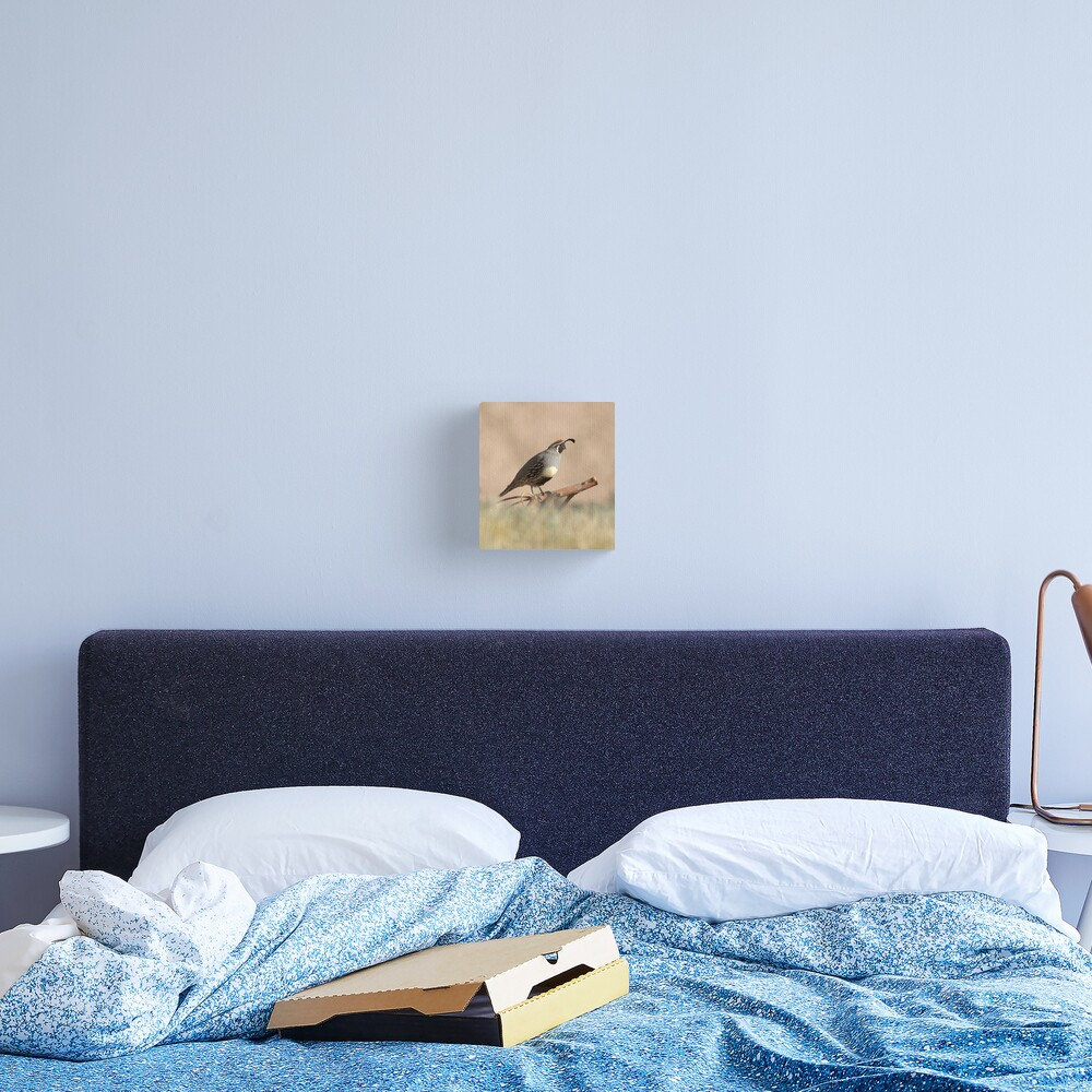 Quail rising Canvas Print