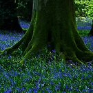 Tree Among the Bluebells by Guy Carpenter