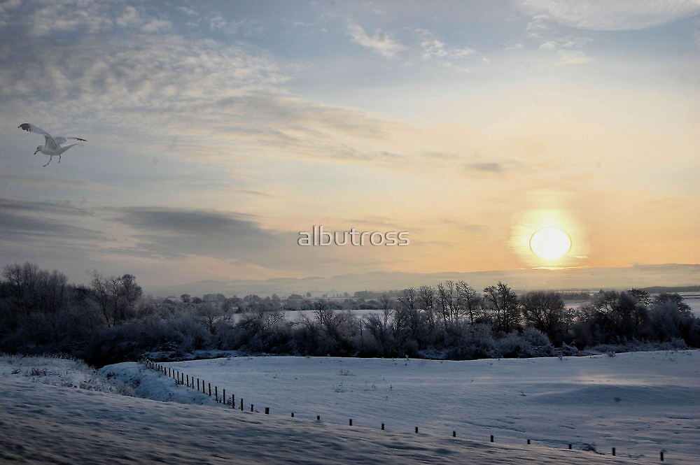Snowy scene. by albutross