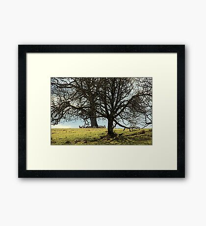 Hidden Herd Framed Print